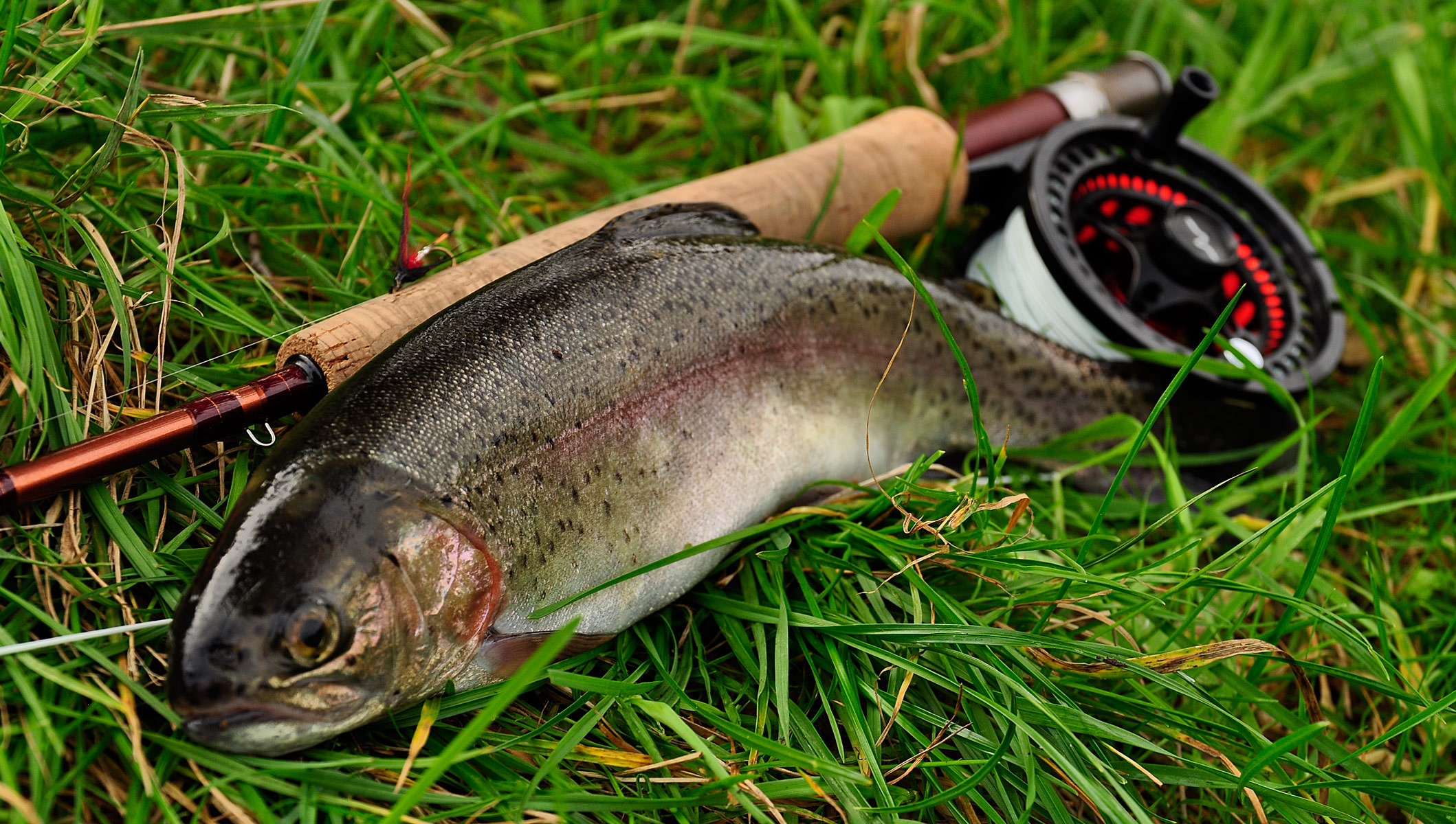 ryans fisk og vildt